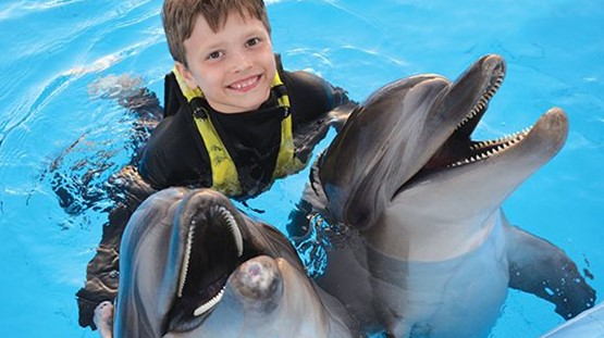 Dolphin world Show