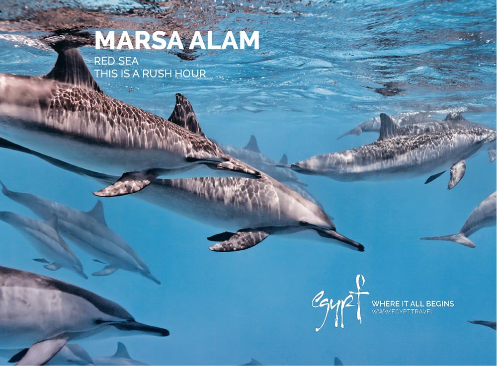 Dolphin House Satayeh
